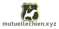 mutuellechien.xyz